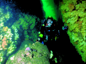 Diver in St Abbs gully