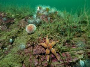 Loch Melfort, starfish & wall